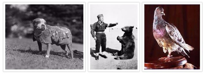 Top Animals To Make Military Appearances
