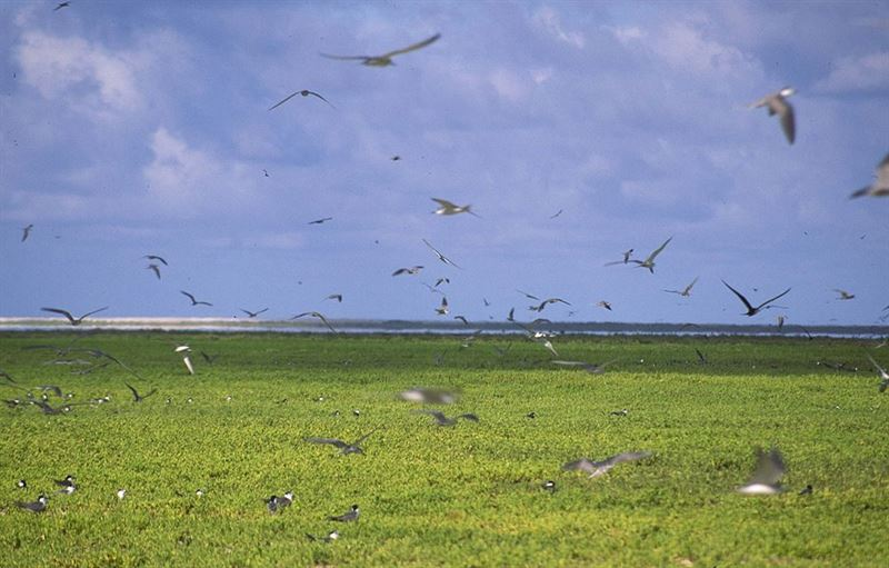 Malden Island, once a nuclear test site in the Pacific, is now a nature preserve and protected breeding ground for seabirds.