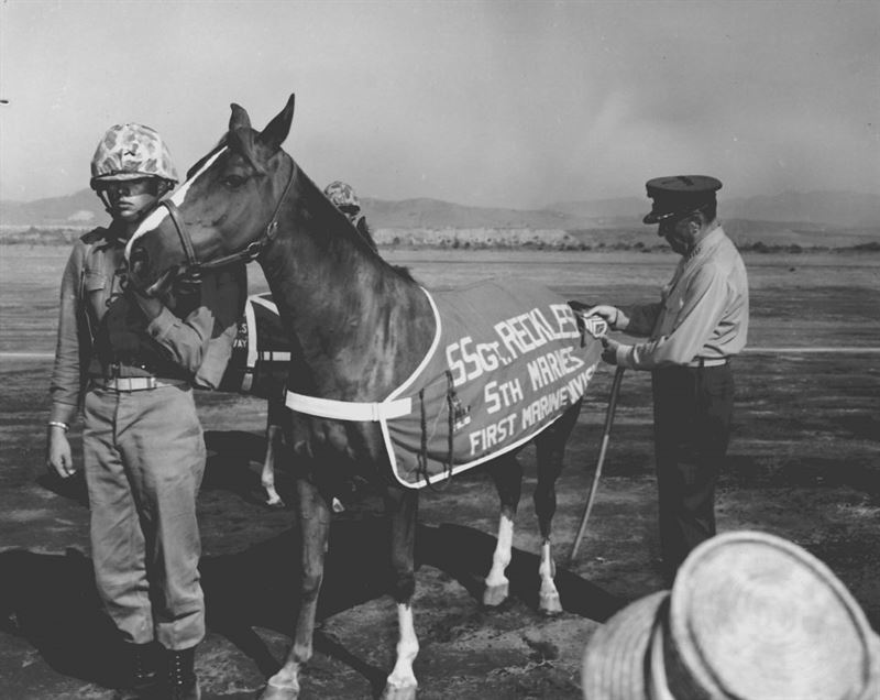 Sergeant Reckless getting promoted to Staff Sergeant in 1959 at Camp Pendleton